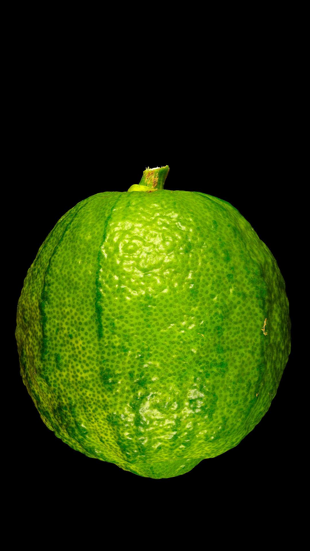 Breadfruit übersetzung
