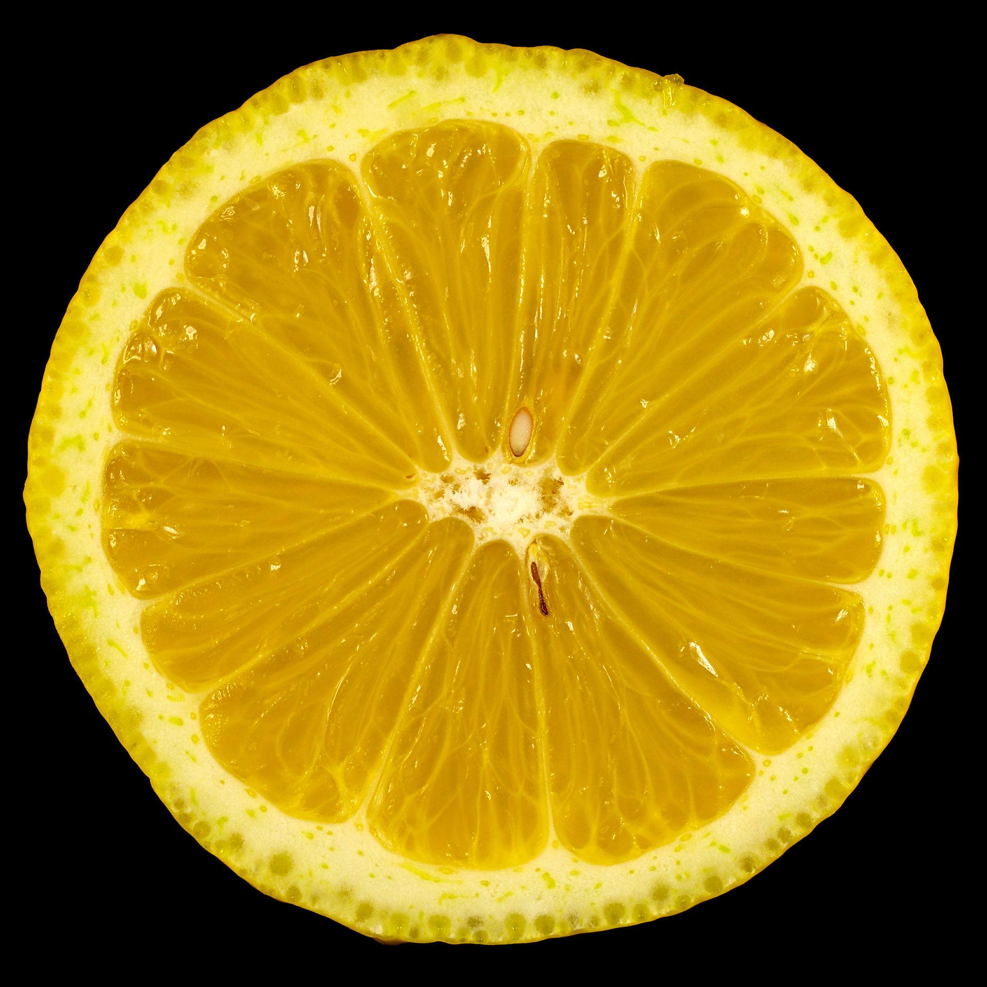 die buntlaubige zitrone citrus limon foliis variegatis flora obscura. Black Bedroom Furniture Sets. Home Design Ideas