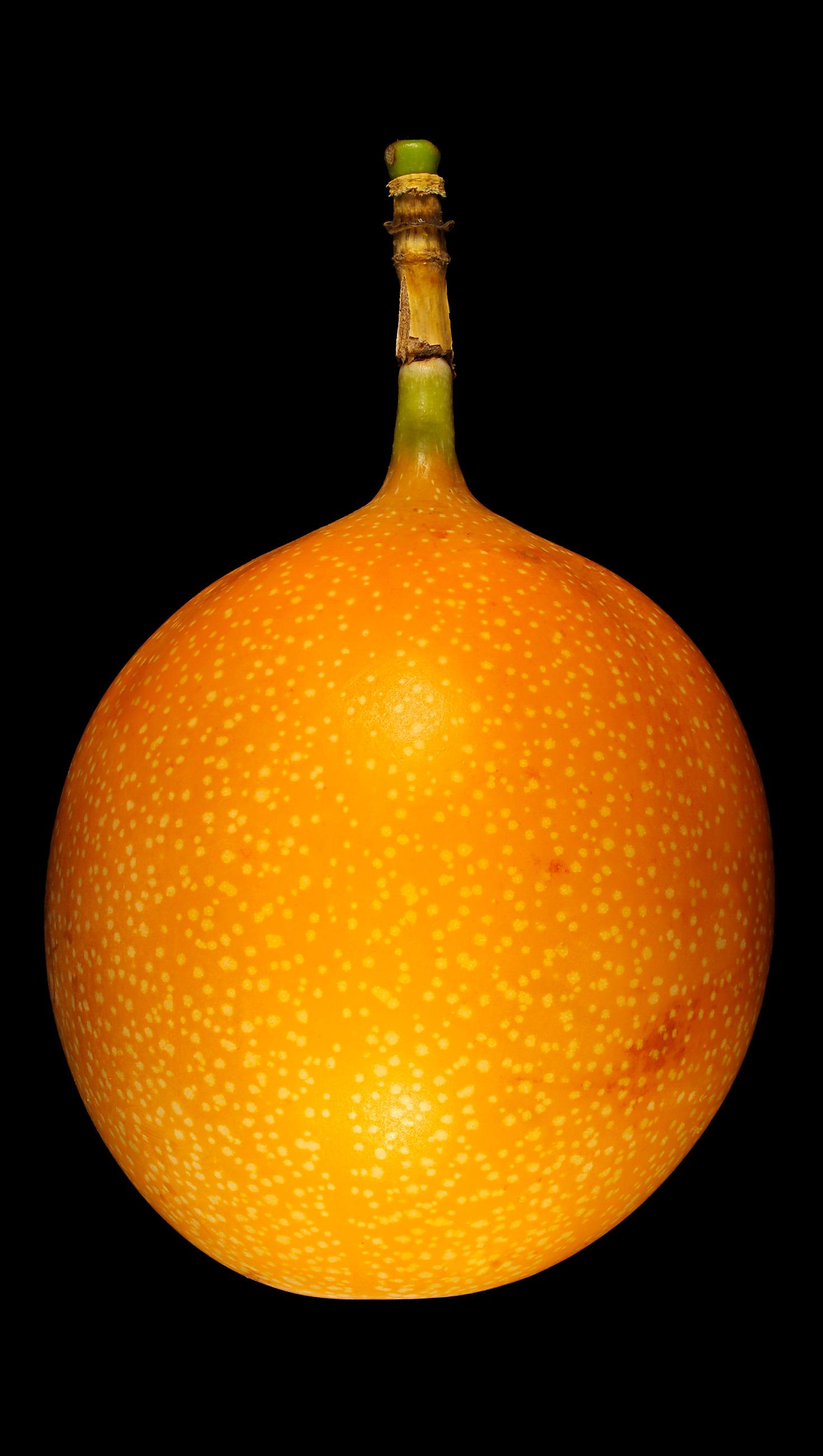 Farbe Orange Flora Obscura